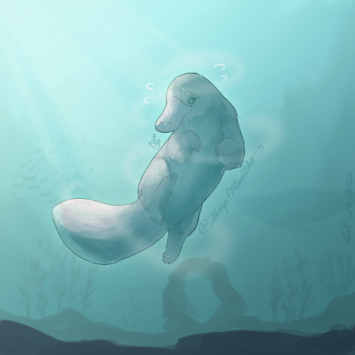 Platypus Pianka