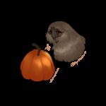 {GH} Pumpkin Snatch Week I - Mocha