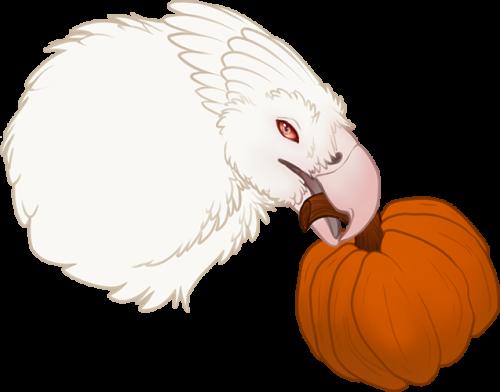 Pumpkin Snatch week 1