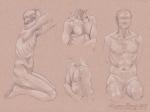 Figure Anatomy: Torso Studies
