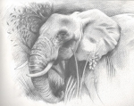 Elephant Unfinished