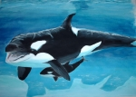 Mother and Child_Orcas