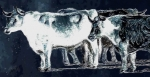 Blue Cattle