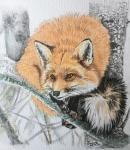 Fox on tree branch