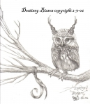 little horned owl