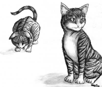::CATS::