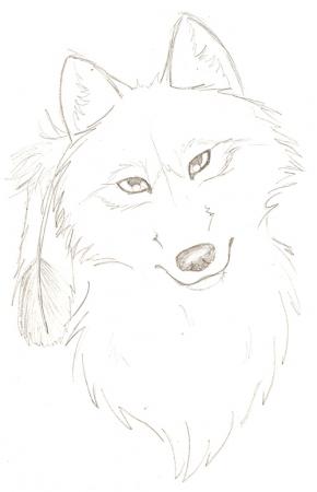purdy wolf