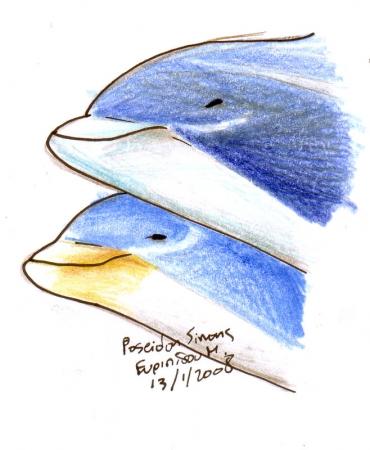beak differences
