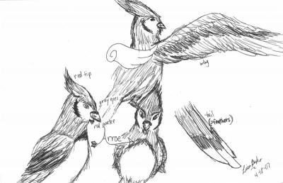 Arroe sketches