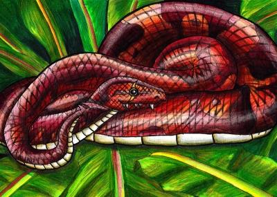 Snakeypuu