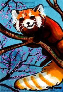 Red Panda ACEO