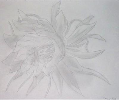 A Forgotten Flower