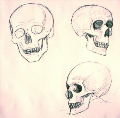 Skull Study 1: Lines
