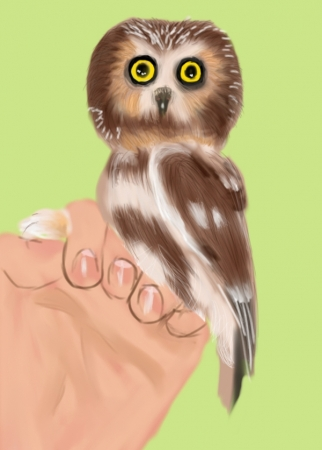Holding Out for a Hoot