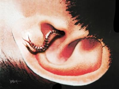 THE EARWIG