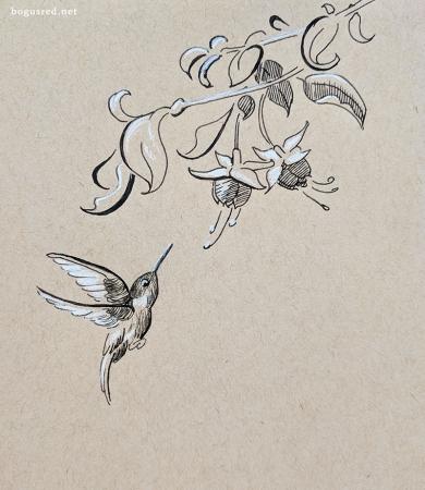 Hummingbird Inktober 2