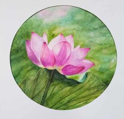 Dreaming lotus