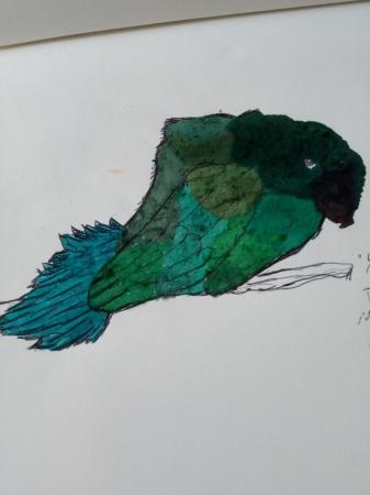 Moss Bird