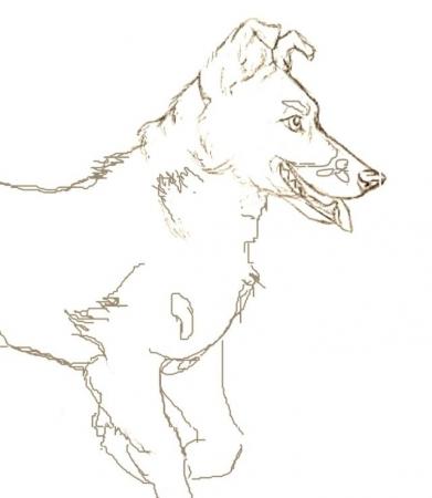 Puppy (WIP)