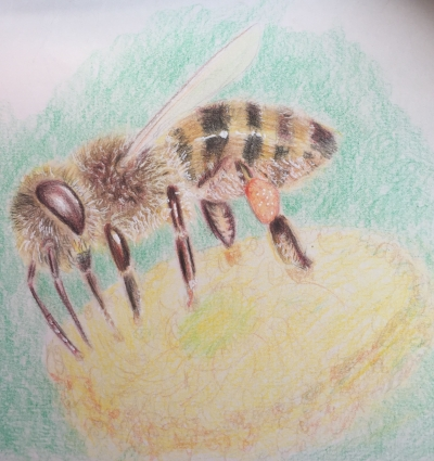 A Bee 2