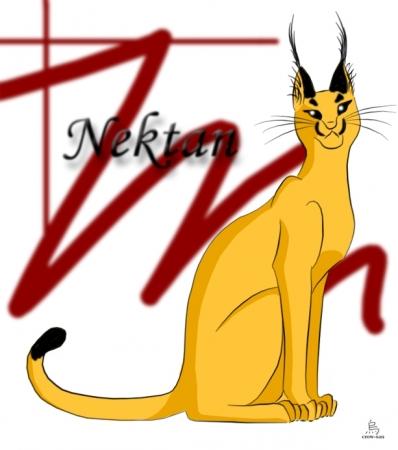 Nektan the Caracal