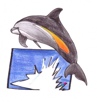atlantic whitesided dolphin