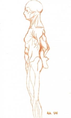 Anatomy Study #2