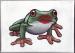 The Frog Prince by Kikikins