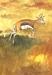 Springbok by Piglet