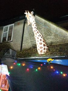 Adventure giraffe 1