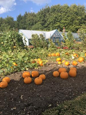 Pumpkin titsey garden