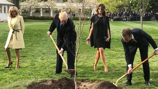 Symbolic Friendship Tree Planted by Trump and Macron Has Died, Reports Say