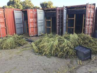 In this Tuesday, June 18, 2019, photo released by the Santa Barbara County Sheriff shows an illegal cannabis cultivation site in the City of Santa Maria, in San Luis Obispo County, Calif. Authorities have seized 20 tons of illegal cannabis in a raid that took four days complete following a two-month investigation. The Santa Barbara County Sheriff's Office also says Saturday it destroyed 350,000 cannabis plants from the illegal grow outside Buellton, a city about 140 miles northwest of Los Angeles