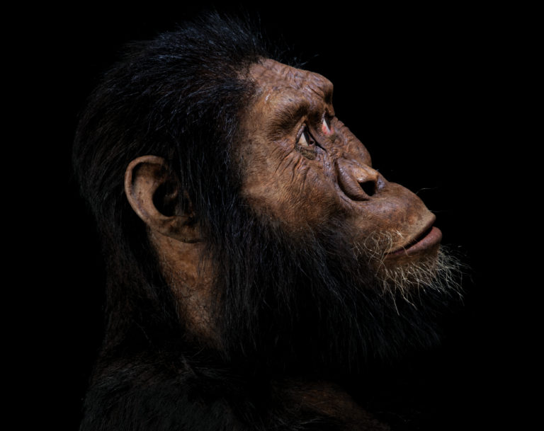A fossil from Ethiopia is letting scientists look millions of years into our evolutionary history and they see a face peering back.  The find, from 3.8 million years ago, reveals the face for a presumed ancestor of the species famously represented by Lucy, the celebrated Ethiopian partial skeleton found in 1974.  This ancestral species is the oldest known member of Australopithecus, a grouping of creatures that preceded our own branch of the family tree, called Homo.