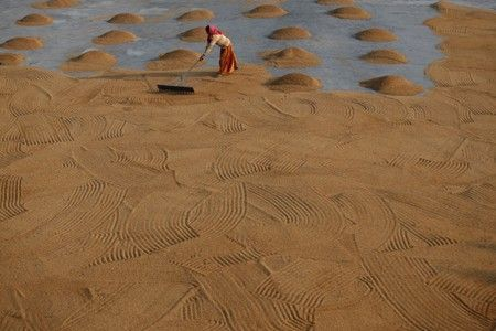 Asia Rice: Vietnam struggles to find new buyers as Chinese demand dwindles