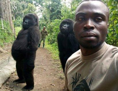 Gorillas pose for selfie with DR Congo anti-poaching unit