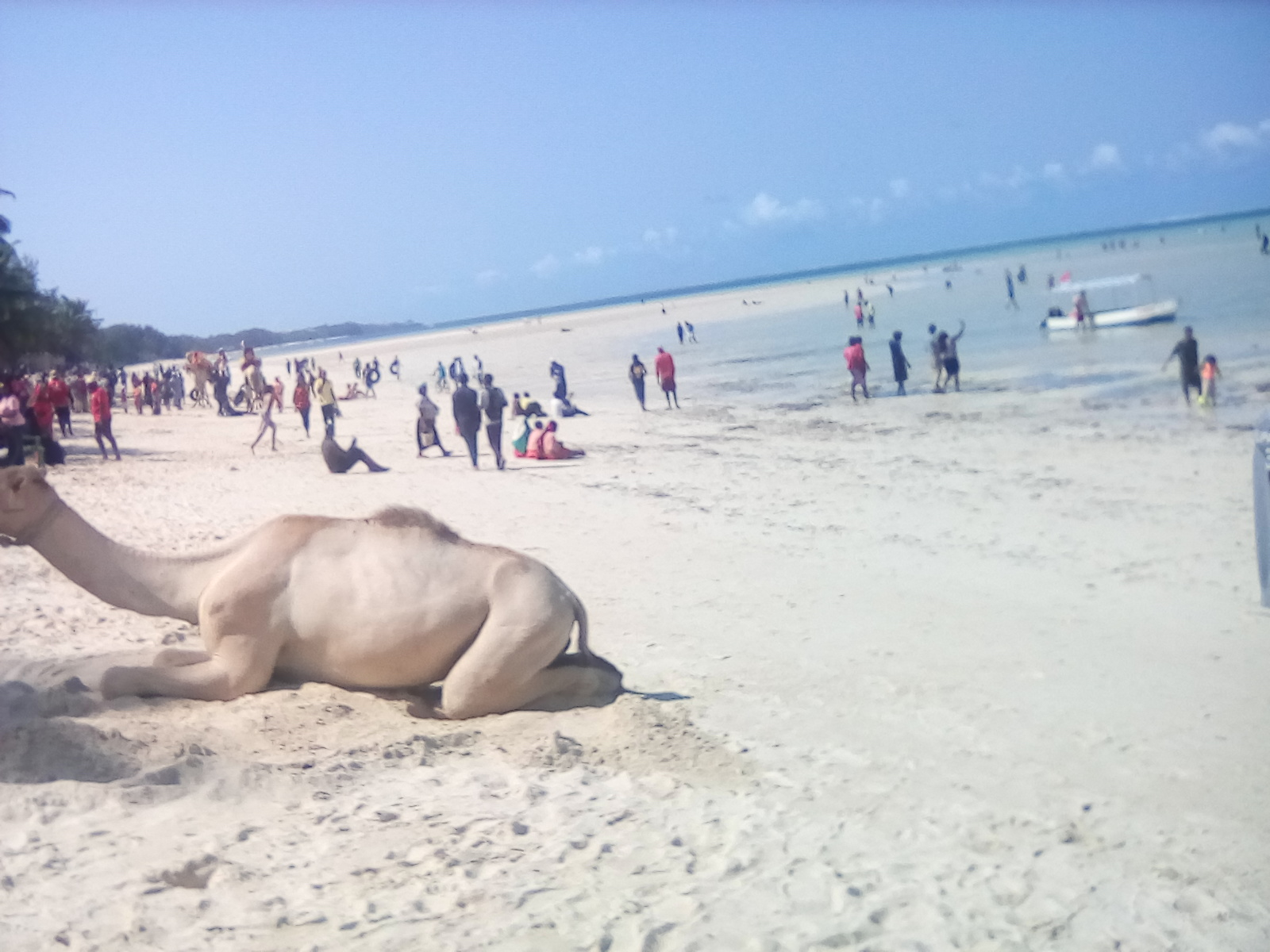 Resting on a beautiful public beach is for everyone. Even camels can rest!