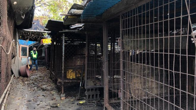 South Korea closes largest dog meat slaughterhouse