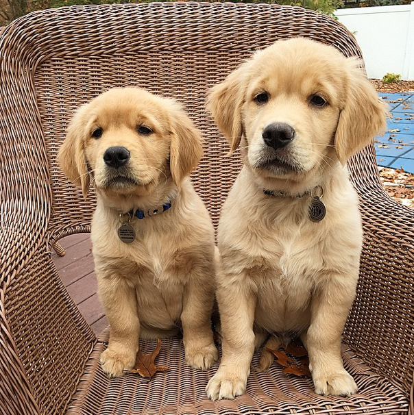 The Cutest Pups