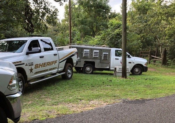 More than a dozen dogs were rescued by Jefferson County sheriffs deputies in what appeared be a dog-fighting operation.