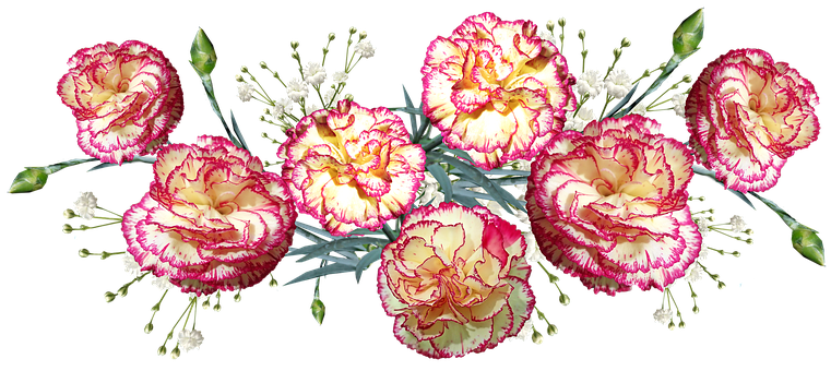 Flowers Pictures Art