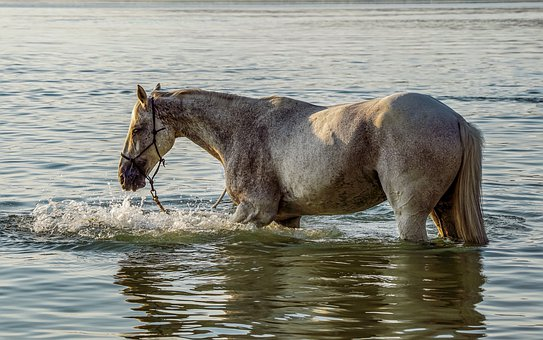 Horse on the Water