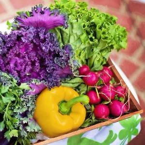 Demo Organic Market, Demo Organic Market
