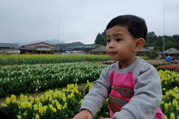 5 Gardening Activities for Preschoolers