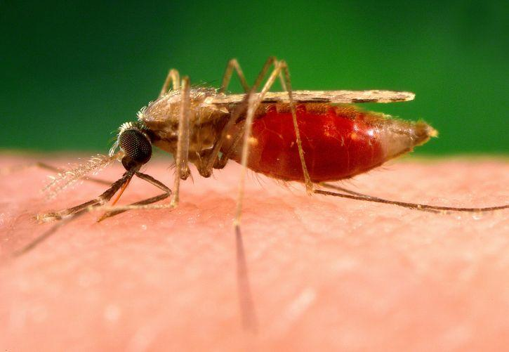 Malaria In Toddlers: Causes, Symptoms And Treatment