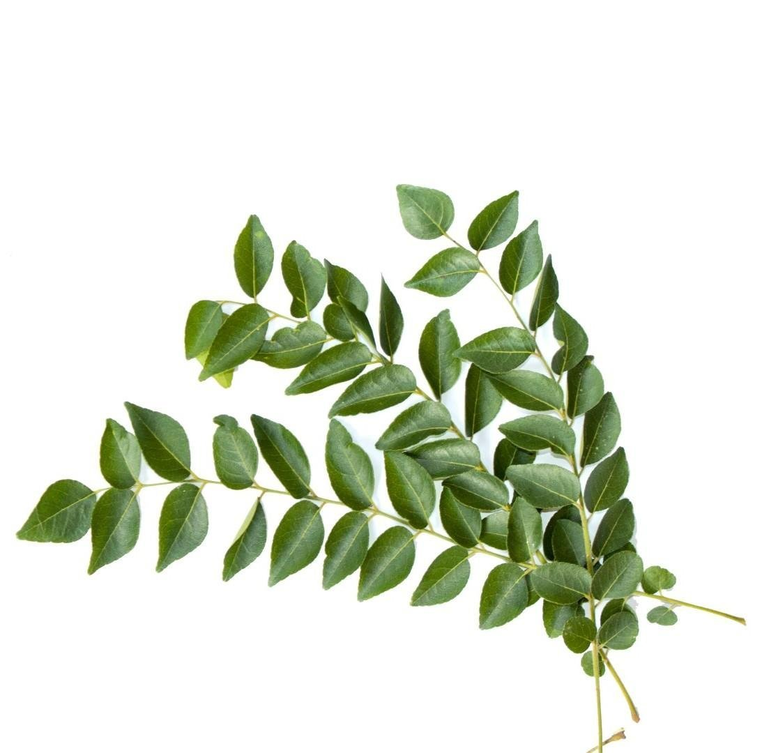 Medicinal uses of curry leaves