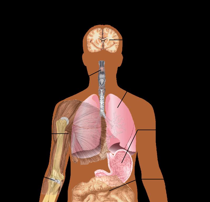 Understanding Swine Flu