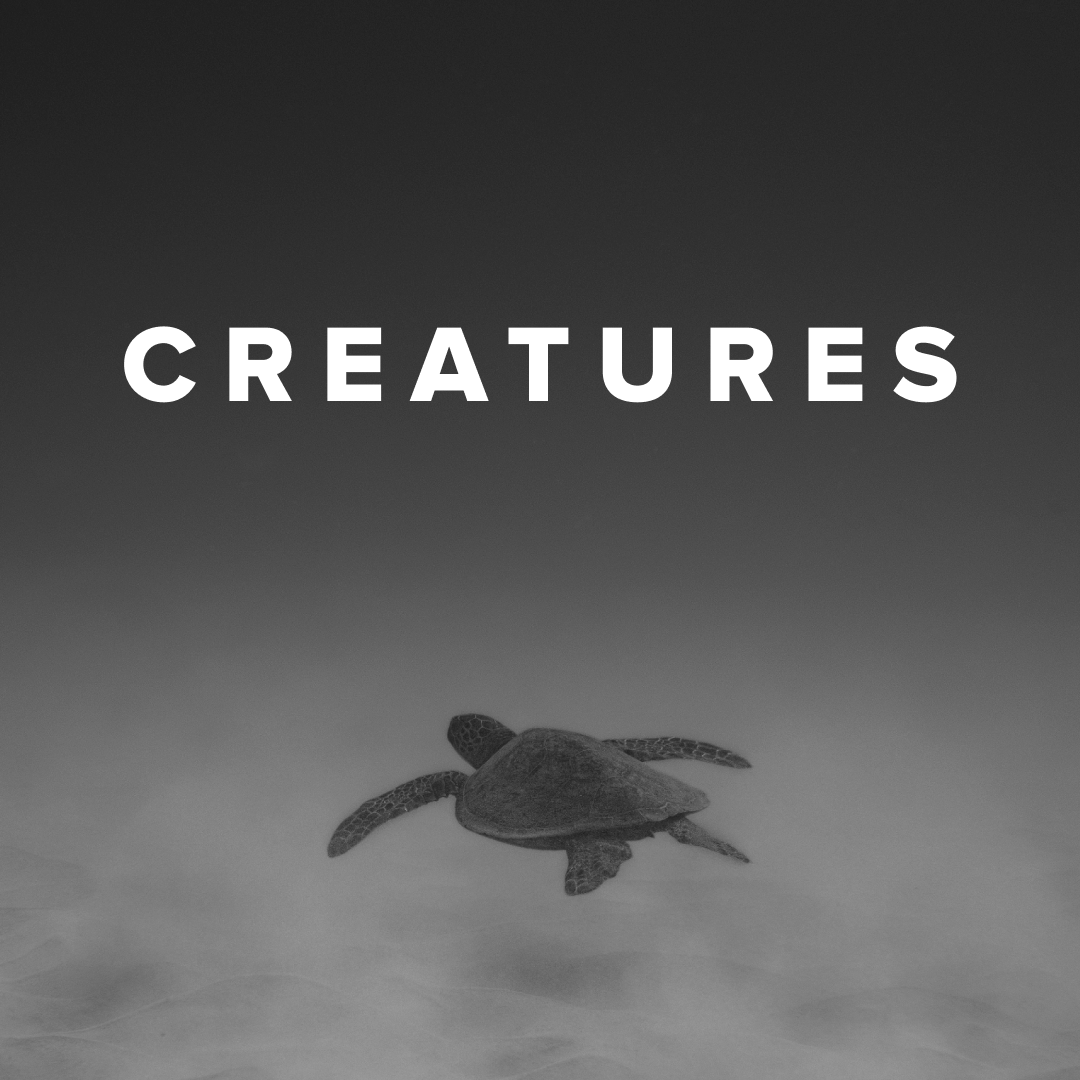 Worship Songs about Creatures