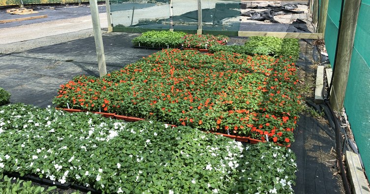 Spring planting 2019