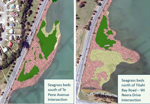 seagrass and seabeds.JPG